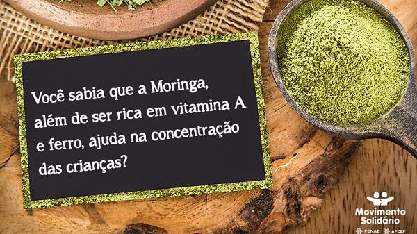 Moringa: mais uma frente no combate à desnutrição em Belágua