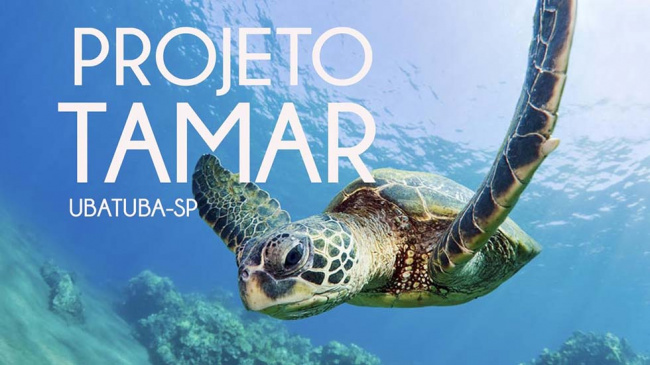 Conheça o Projeto Tamar. Hospede-se em Ubatuba